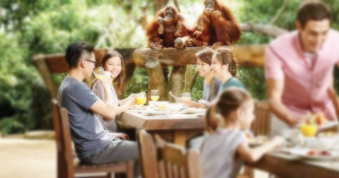Breakfast With Orang Utan
