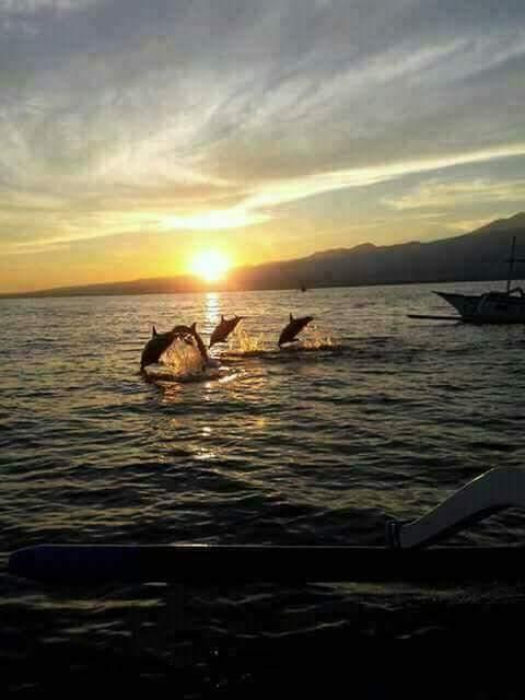 Bali Full day Lovina Tour