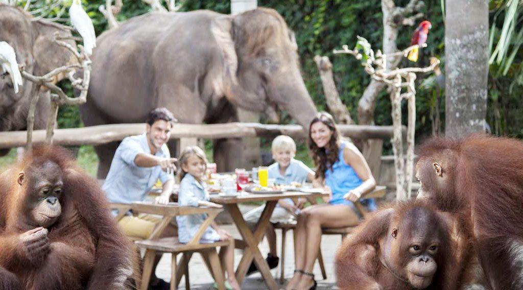 Bali Zoo Breakfast With Orang Utan