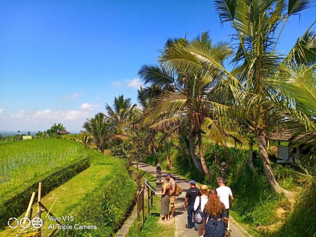 Bali Tour Service